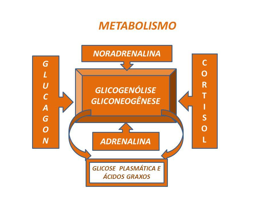 METABOLISMO GLICOGENÓLISE GLICONEOGÊNESE NORADRENALINA ADRENALINA GLUCAGONGLUCAGON CORTISOLCORTISOL GLICOSE PLASMÁTICA E ÁCIDOS GRAXOS