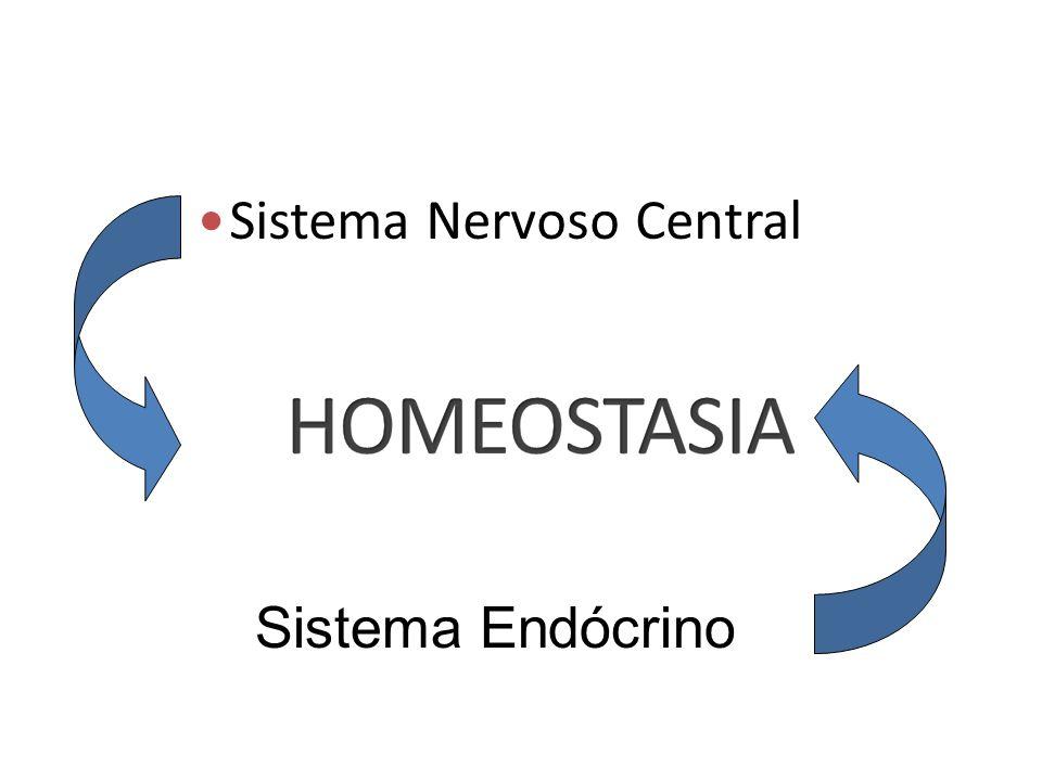 Sistema Nervoso Central Sistema Endócrino