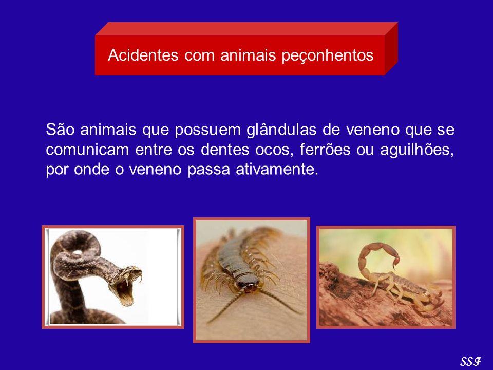 Acidentes com animais peçonhentos São animais que possuem glândulas de veneno que se comunicam entre os dentes ocos, ferrões ou aguilhões, por onde o