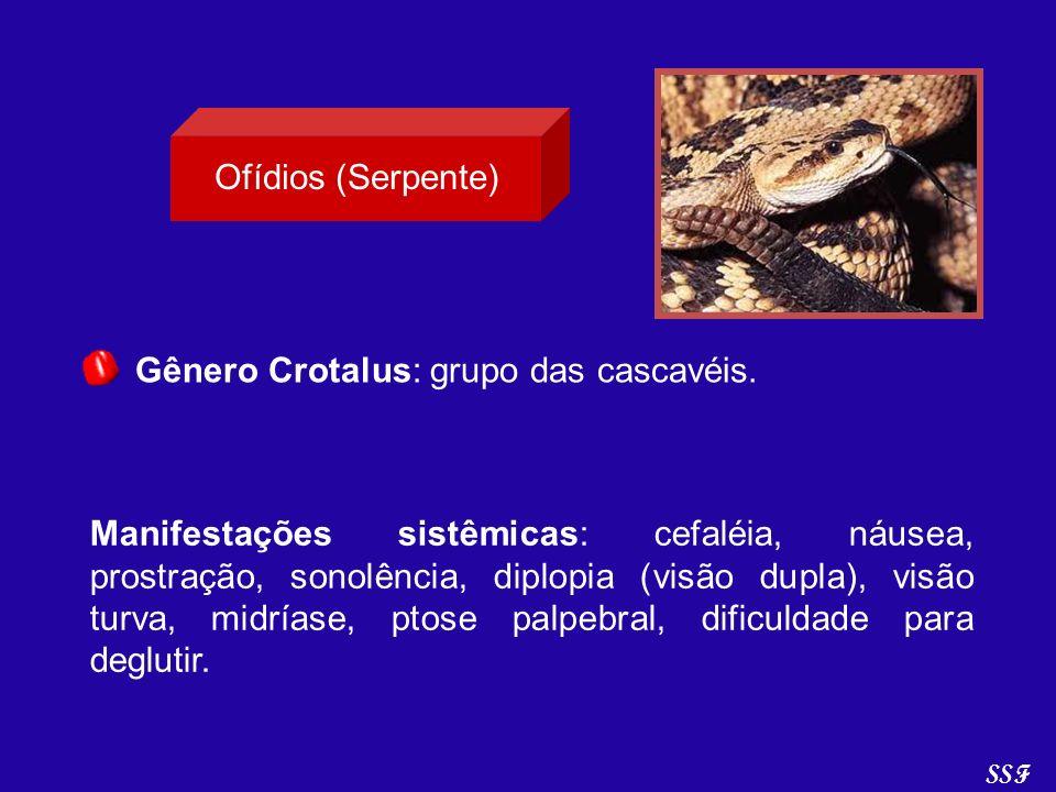 Gênero Crotalus: grupo das cascavéis. Manifestações sistêmicas: cefaléia, náusea, prostração, sonolência, diplopia (visão dupla), visão turva, midrías