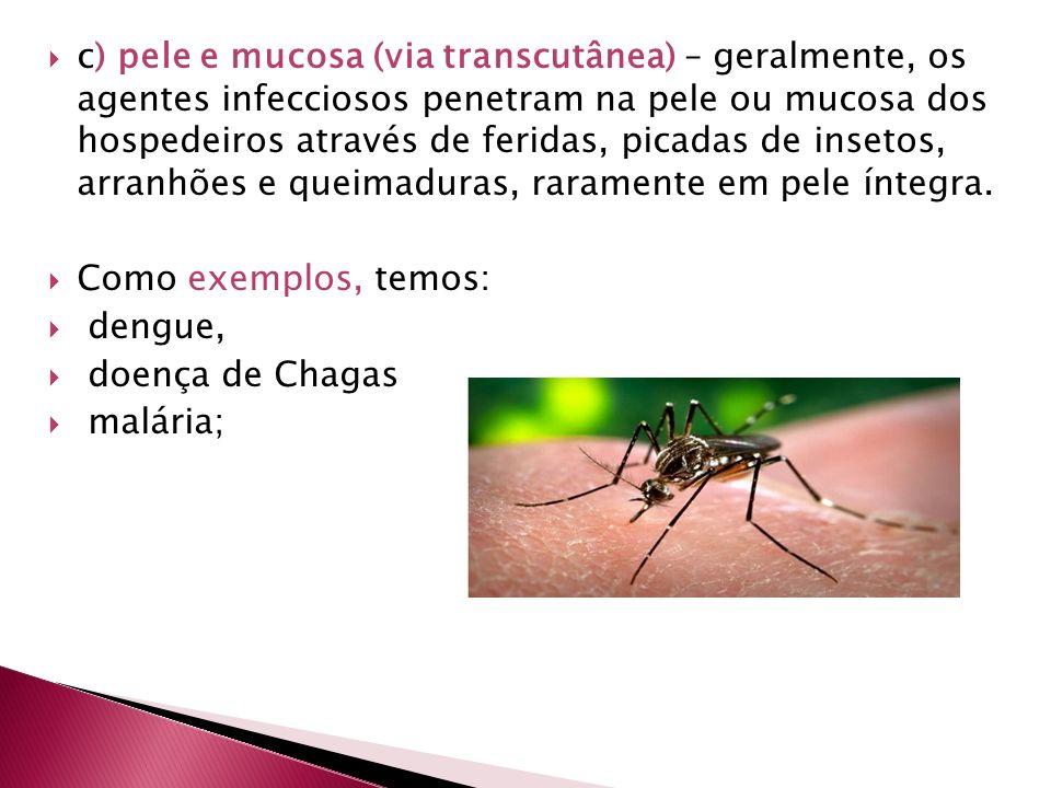 c) pele e mucosa (via transcutânea) – geralmente, os agentes infecciosos penetram na pele ou mucosa dos hospedeiros através de feridas, picadas de ins