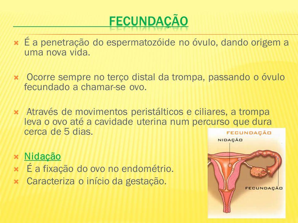 É a penetração do espermatozóide no óvulo, dando origem a uma nova vida. Ocorre sempre no terço distal da trompa, passando o óvulo fecundado a chamar-