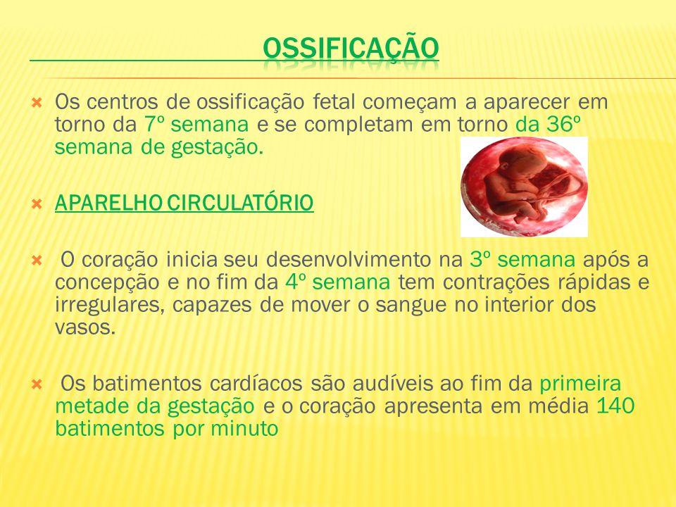 Os centros de ossificação fetal começam a aparecer em torno da 7º semana e se completam em torno da 36º semana de gestação. APARELHO CIRCULATÓRIO O co