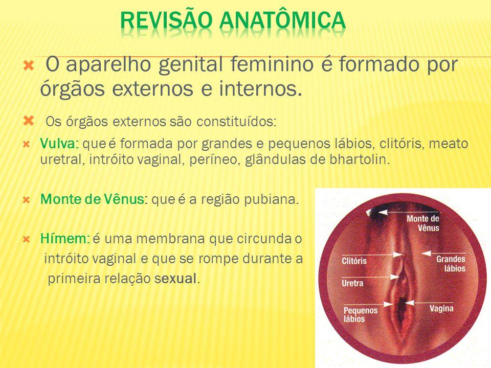 O aparelho genital feminino é formado por órgãos externos e internos. Os órgãos externos são constituídos: Vulva: que é formada por grandes e pequenos