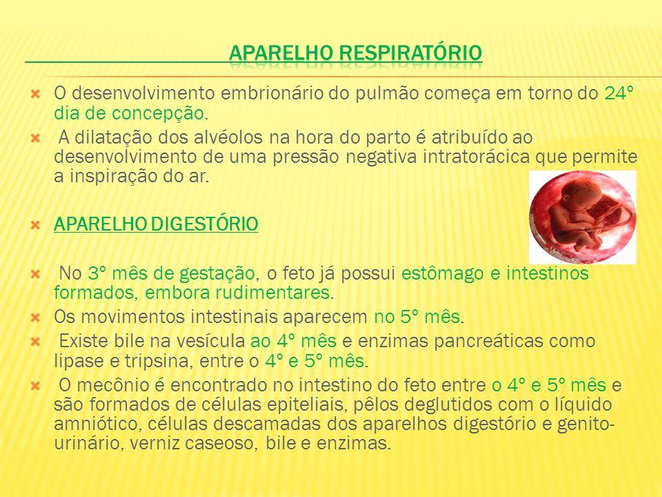 O desenvolvimento embrionário do pulmão começa em torno do 24º dia de concepção. A dilatação dos alvéolos na hora do parto é atribuído ao desenvolvime