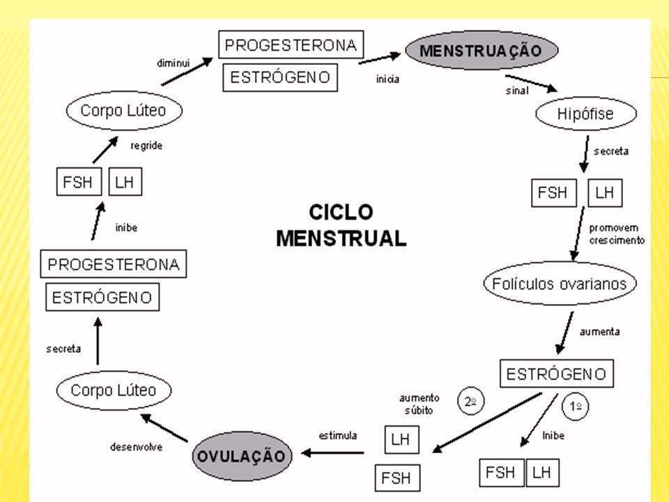O ciclo menstrual ocorre por ação de quatro hormônios: 2 hipofisários: fsh – hormônio folículo estimulante lh – hormônio luteinizante 2 ovarianos: estrogênio progesterona Apresenta duas fases distintas: 1º fase – proliferativa 2º fase – secretória