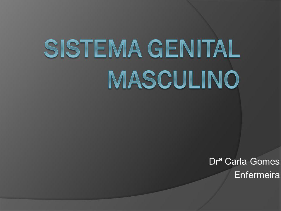 Os órgãos do sistema genital masculino são os testículos (gônadas masculinas), um sistema de ductos (ducto deferente, ducto ejaculatório e uretra), as glândulas sexuais acessórias (próstata, glândula bulbouretral e vesículas seminais) e diversas estruturas de suporte, incluindo o escroto e o pênis.