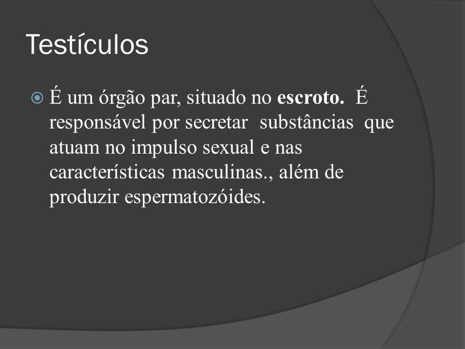 Testículos É um órgão par, situado no escroto. É responsável por secretar substâncias que atuam no impulso sexual e nas características masculinas., a