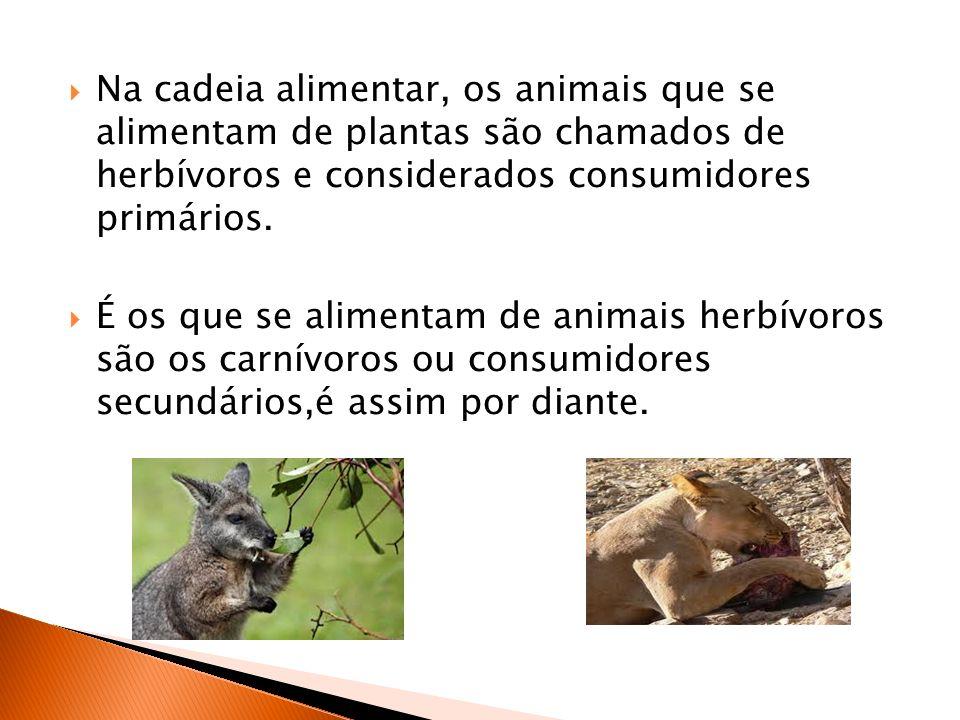 Na cadeia alimentar, os animais que se alimentam de plantas são chamados de herbívoros e considerados consumidores primários. É os que se alimentam de