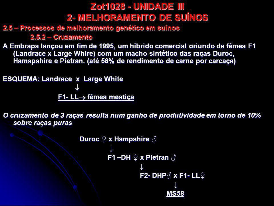 Zot1028 - UNIDADE III 2- MELHORAMENTO DE SUÍNOS O MS60 (EMBRAPA) - mestiço das raças Duroc, Large White e Pietran, ele é livre do gene halonato (estresse no animal e depreciação da qualidade da carne).
