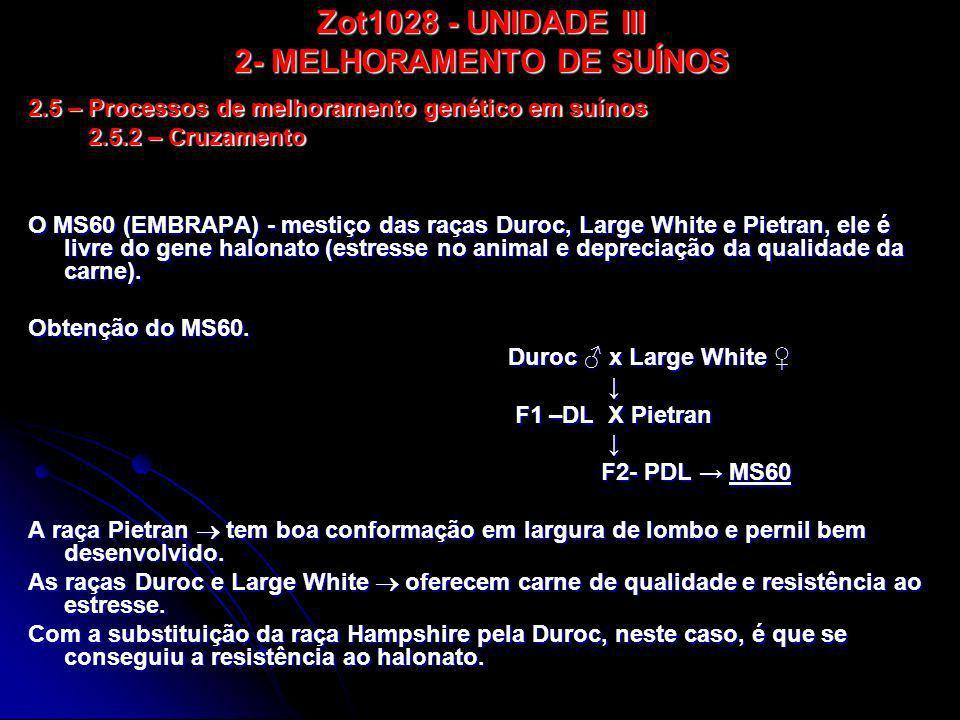 Zot1028 - UNIDADE III 2- MELHORAMENTO DE SUÍNOS O MS60 (EMBRAPA) - mestiço das raças Duroc, Large White e Pietran, ele é livre do gene halonato (estre