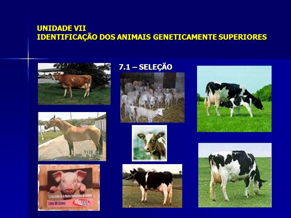 UNIDADE VII IDENTIFICAÇÃO DOS ANIMAIS GENETICAMENTE SUPERIORES 7.6 – SELEÇÃO PARA VÁRIAS CARACTERÍSTICAS 7.6.1- Método unitário ou tandem Características em seleção: PD = Peso a desmama (220 kg) PA = Peso aos 365 dias (380 kg) PS = Peso aos 550 dias (590 kg) EXEMPLO: Animal 1: PD = 220 kg; PA = 380 kg; PS = 580 kg Animal 2: PD = 230 kg; PA = 390 kg; PS = 585 kg Animal 3: PD = 210 kg; PA = 380 kg; PS = 590 kg Animal 4: PD = 220 kg; PA = 380 kg; PS = 580 kg Animal 4: PD = 225 kg; PA = 390 kg; PS = 580 kg Animal 5: PD = 220 kg; PA = 390 kg; PS = 600 kg