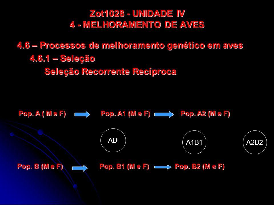 Zot1028 - UNIDADE IV 4 - MELHORAMENTO DE AVES 4.6 – Processos de melhoramento genético em aves 4.6.2 – Endogamia Linhagem (L) Endogâmica (E) A - Fêmeas L E B - Machos L E C - Machos L E D - Fêmeas Machos AB Fêmeas CD Aves Comerciais