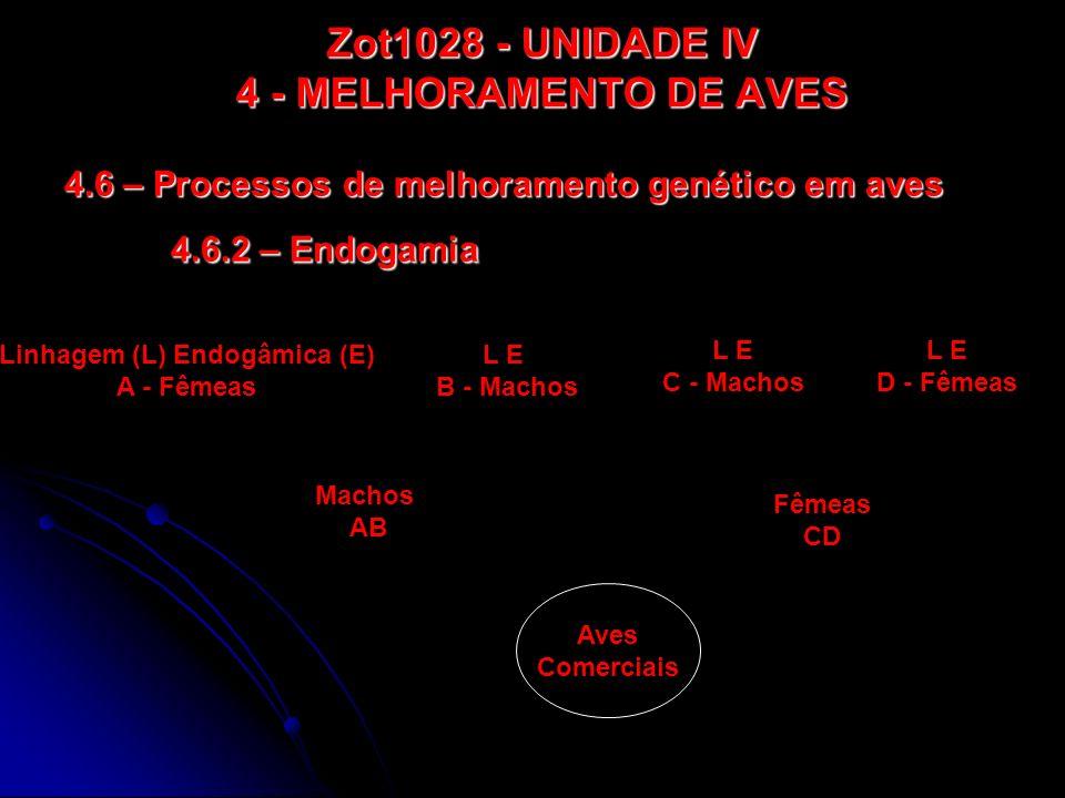 Zot1028 - UNIDADE IV 4 - MELHORAMENTO DE AVES 4.6 – Processos de melhoramento genético em aves 4.6.2 – Endogamia Linhagem (L) Endogâmica (E) A - Fêmea