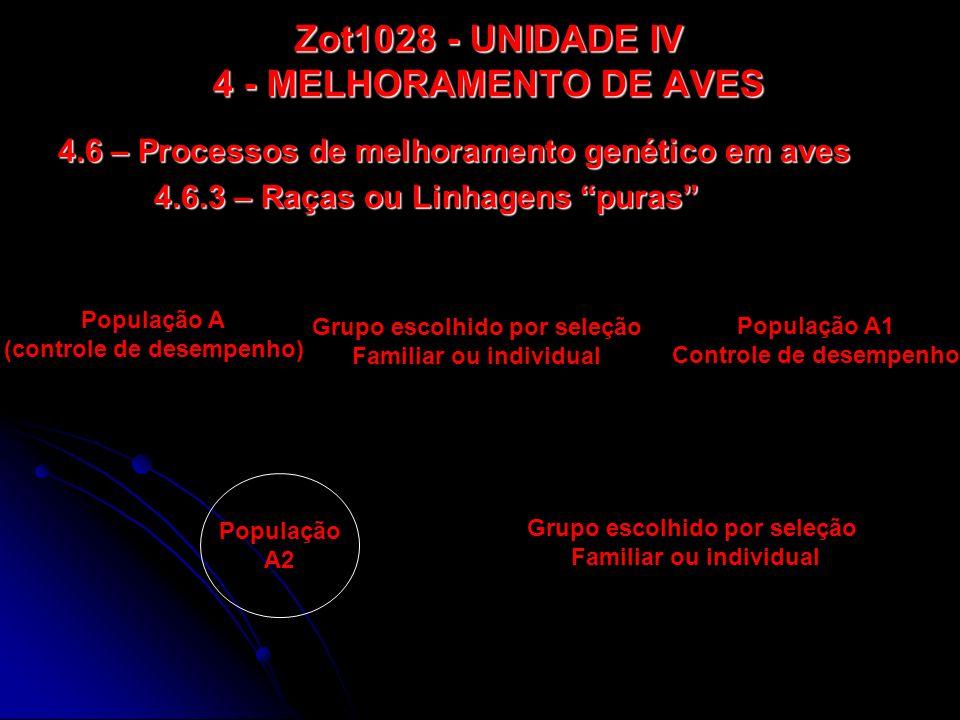 Zot1028 - UNIDADE IV 4 - MELHORAMENTO DE AVES 4.6 – Processos de melhoramento genético em aves 4.6.3 – Raças ou Linhagens puras População A (controle