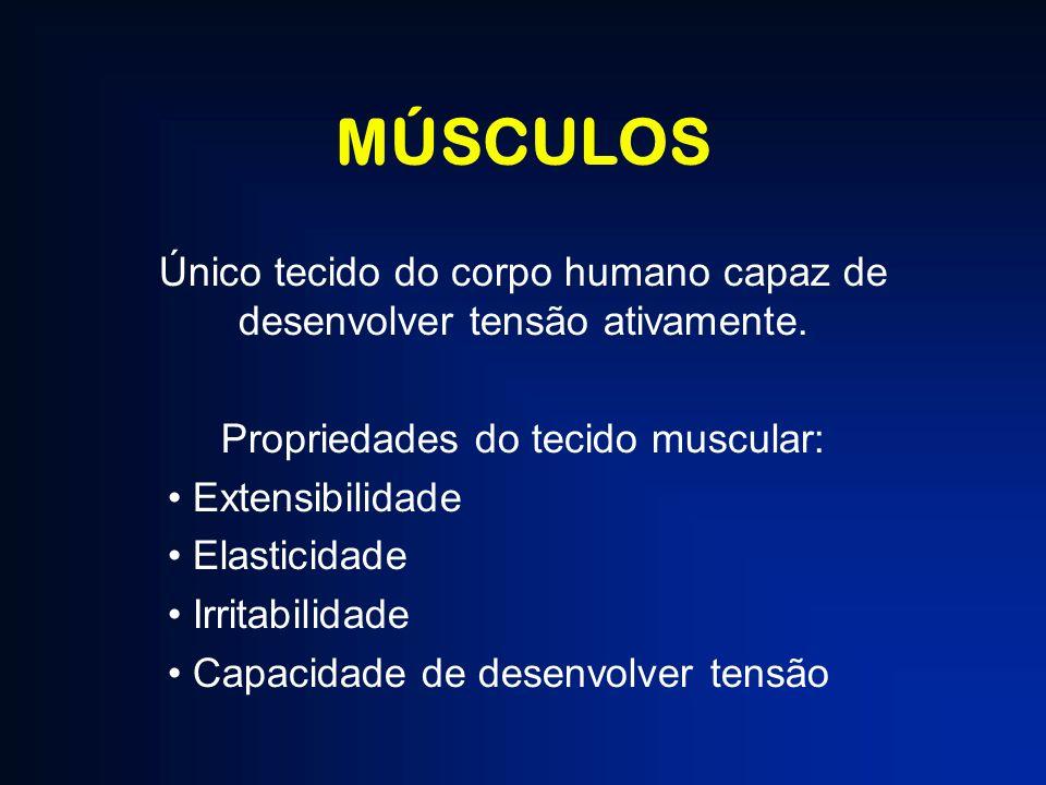 MÚSCULOS Único tecido do corpo humano capaz de desenvolver tensão ativamente. Propriedades do tecido muscular: Extensibilidade Elasticidade Irritabili