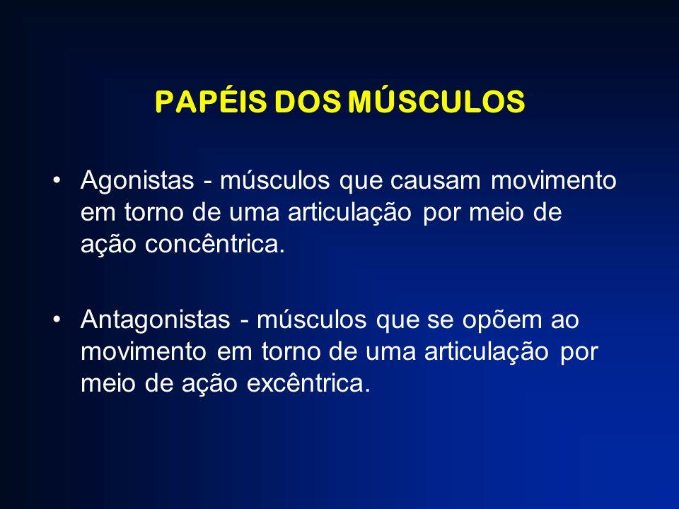 PAPÉIS DOS MÚSCULOS Agonistas - músculos que causam movimento em torno de uma articulação por meio de ação concêntrica. Antagonistas - músculos que se