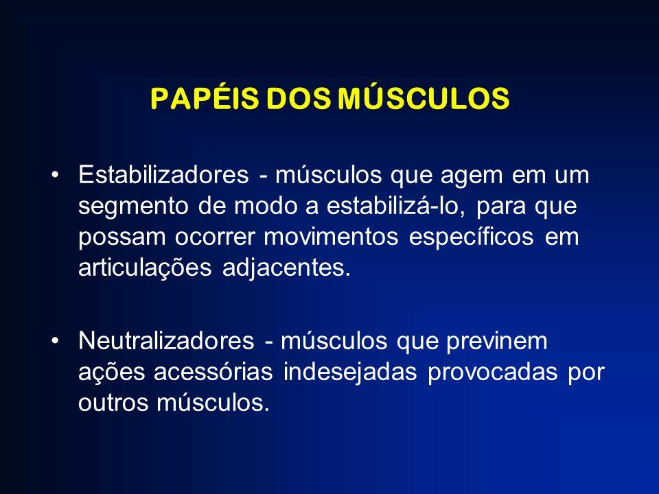 PAPÉIS DOS MÚSCULOS Estabilizadores - músculos que agem em um segmento de modo a estabilizá-lo, para que possam ocorrer movimentos específicos em arti