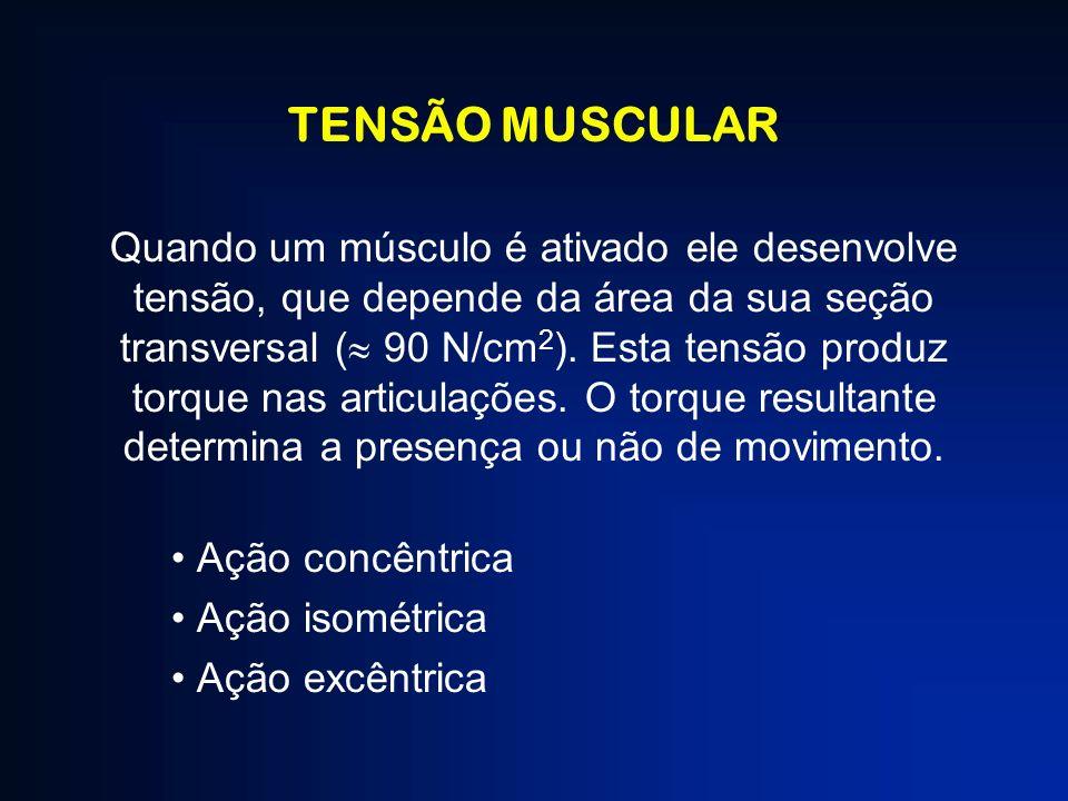 TENSÃO MUSCULAR Quando um músculo é ativado ele desenvolve tensão, que depende da área da sua seção transversal ( 90 N/cm 2 ). Esta tensão produz torq