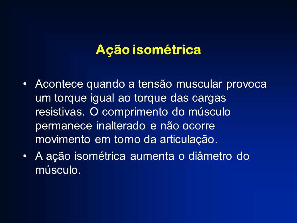 Ação isométrica Acontece quando a tensão muscular provoca um torque igual ao torque das cargas resistivas. O comprimento do músculo permanece inaltera