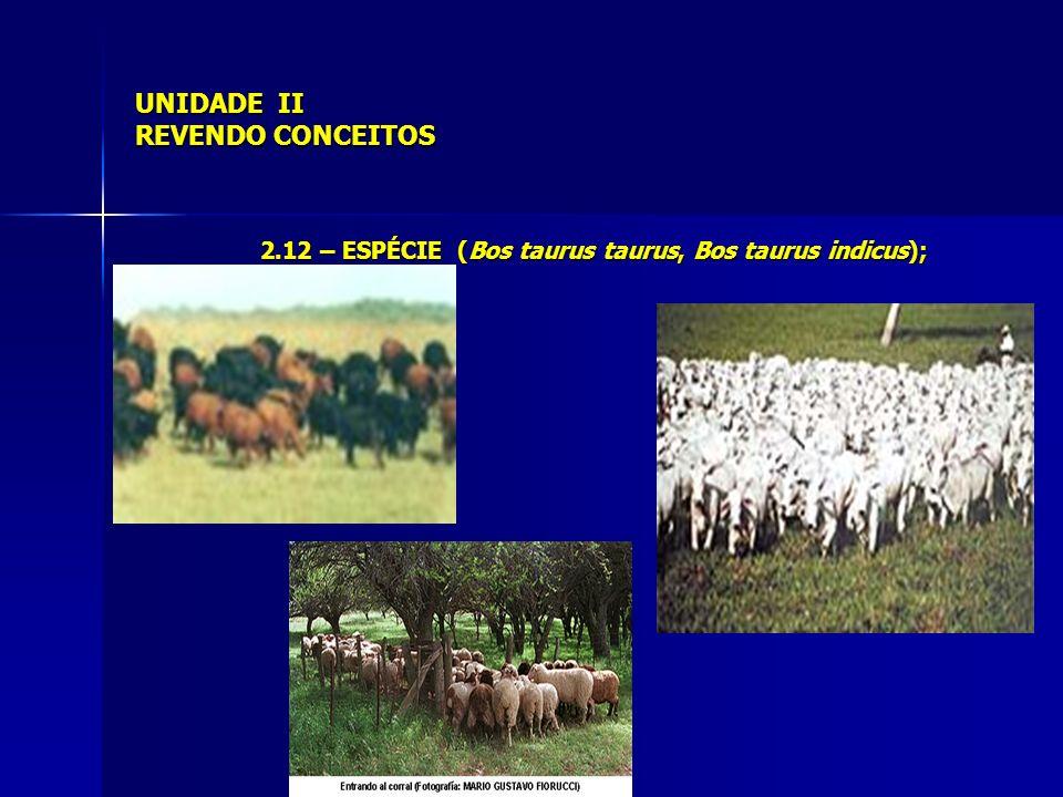 UNIDADE II REVENDO CONCEITOS 2.12 – RAÇA