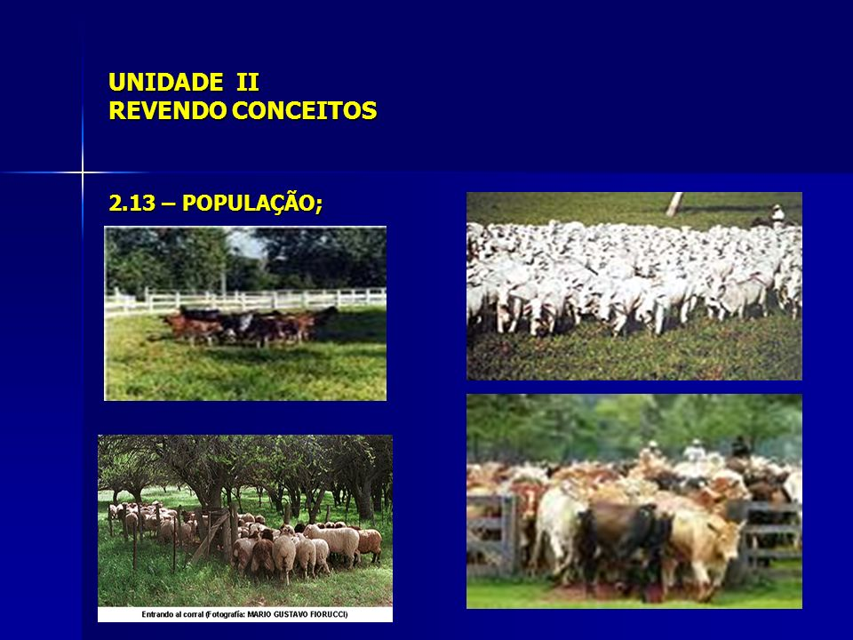UNIDADE II REVENDO CONCEITOS 2.15 – CARATER/CARATERÍSTICA 2.15.1 – Cor da pelagem 2.15.2 – Chifres 2.15.3 – Número de ovos, láparos, leitões...