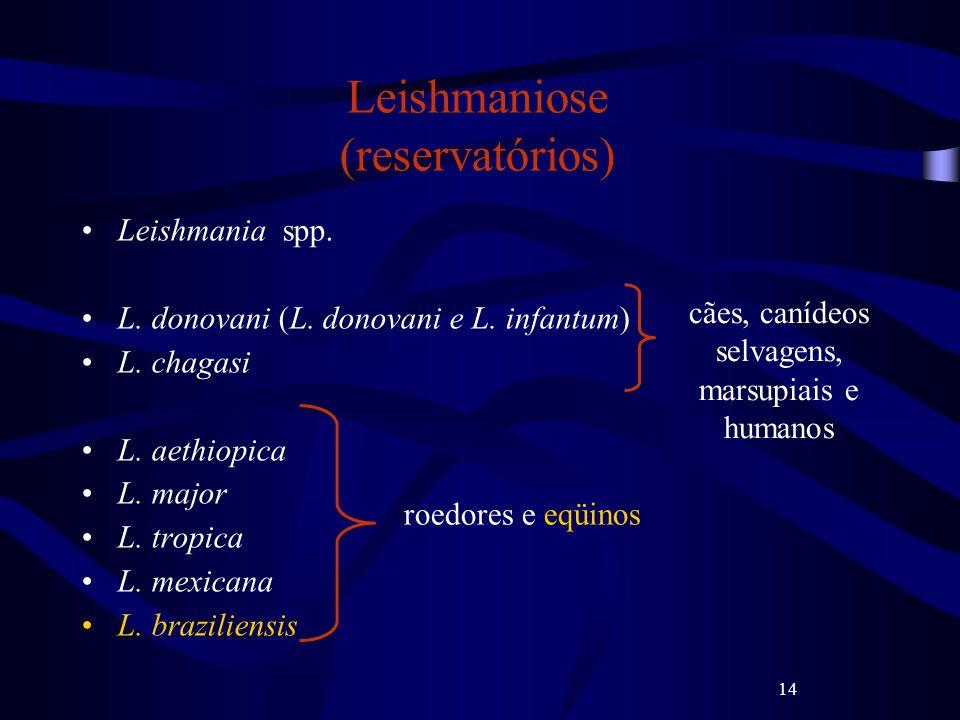 14 Leishmaniose (reservatórios) Leishmania spp. L. donovani (L. donovani e L. infantum) L. chagasi L. aethiopica L. major L. tropica L. mexicana L. br