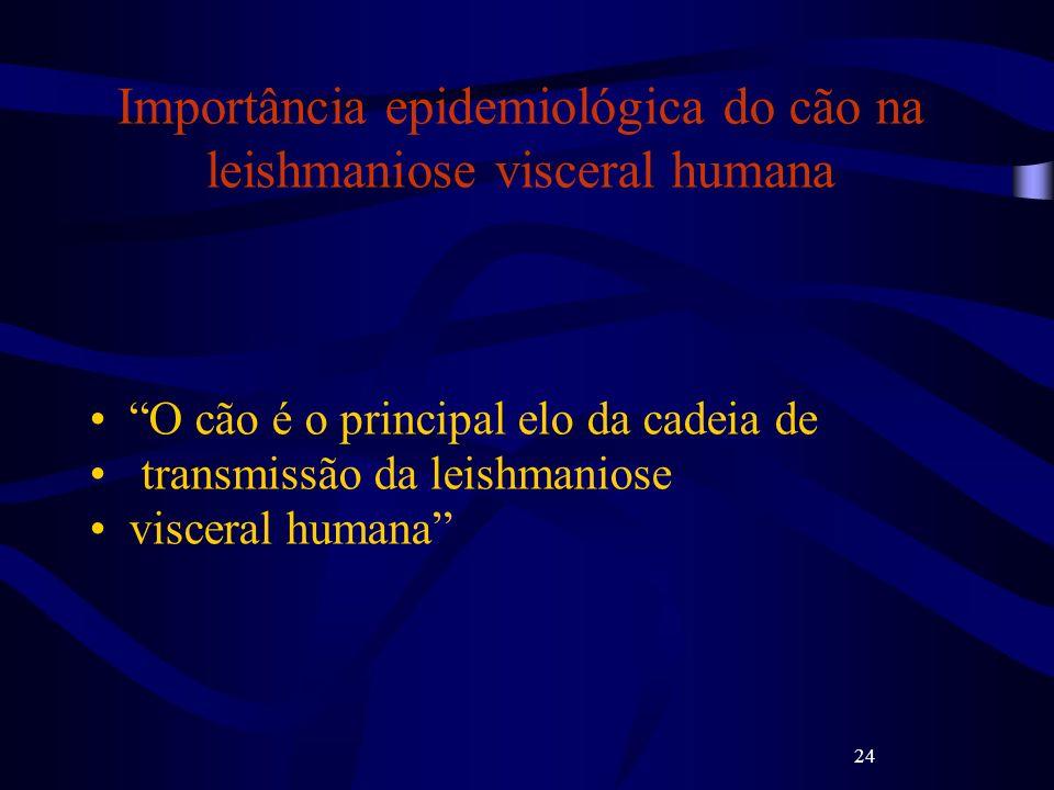 24 Importância epidemiológica do cão na leishmaniose visceral humana O cão é o principal elo da cadeia de transmissão da leishmaniose visceral humana