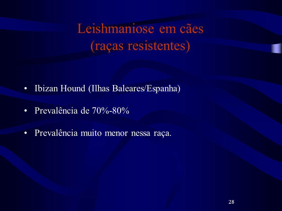28 Leishmaniose em cães (raças resistentes) Ibizan Hound (Ilhas Baleares/Espanha) Prevalência de 70%-80% Prevalência muito menor nessa raça.