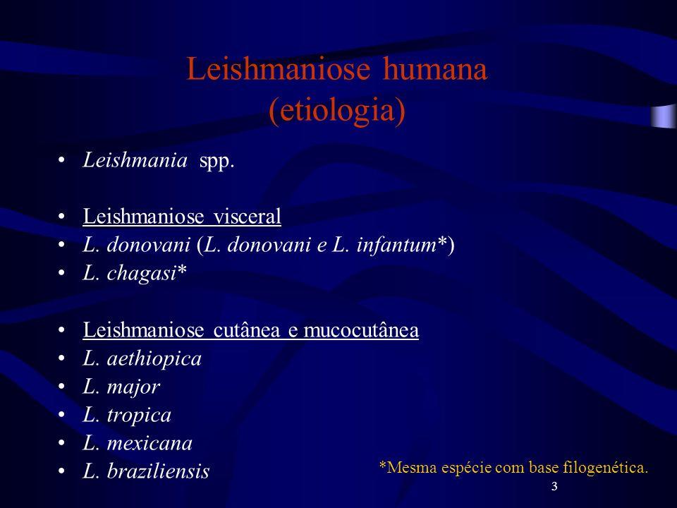 3 Leishmaniose humana (etiologia) Leishmania spp. Leishmaniose visceral L. donovani (L. donovani e L. infantum*) L. chagasi* Leishmaniose cutânea e mu