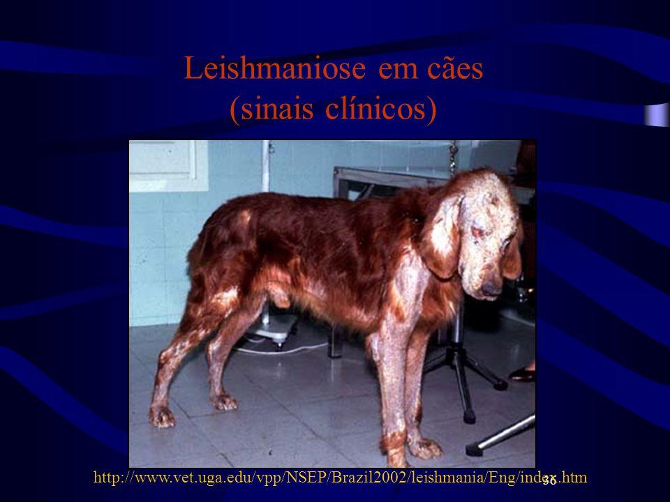 36 Leishmaniose em cães (sinais clínicos) http://www.vet.uga.edu/vpp/NSEP/Brazil2002/leishmania/Eng/index.htm
