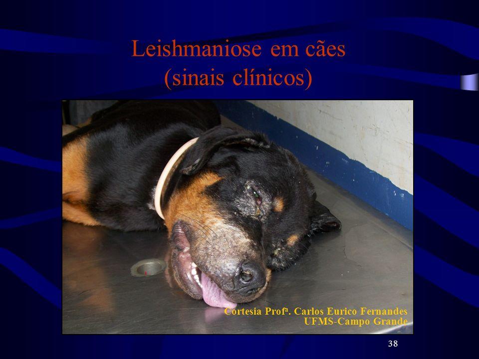 38 Leishmaniose em cães (sinais clínicos) Cortesia Prof a. Carlos Eurico Fernandes UFMS-Campo Grande