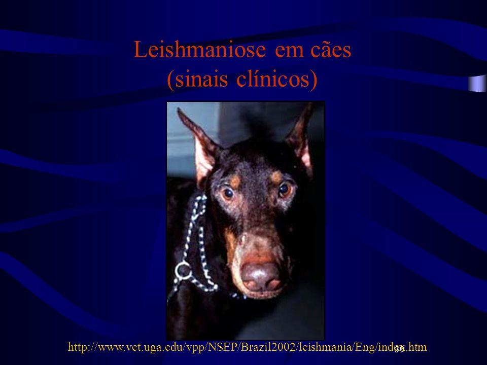 39 Leishmaniose em cães (sinais clínicos) http://www.vet.uga.edu/vpp/NSEP/Brazil2002/leishmania/Eng/index.htm