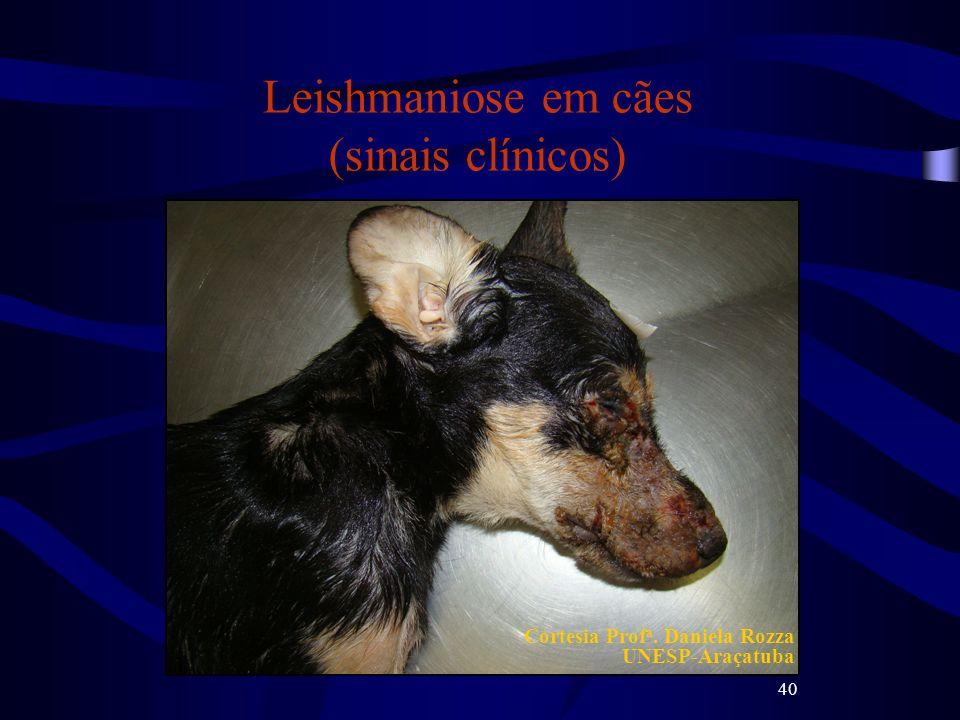 40 Leishmaniose em cães (sinais clínicos) Cortesia Prof a. Daniela Rozza UNESP-Araçatuba
