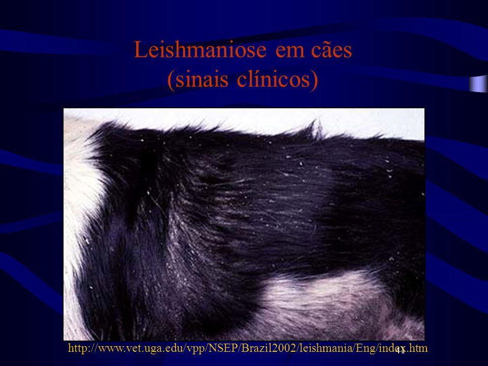 41 Leishmaniose em cães (sinais clínicos) http://www.vet.uga.edu/vpp/NSEP/Brazil2002/leishmania/Eng/index.htm
