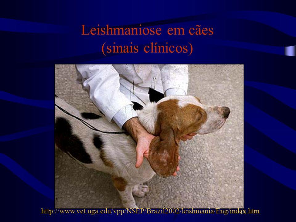 43 Leishmaniose em cães (sinais clínicos) http://www.vet.uga.edu/vpp/NSEP/Brazil2002/leishmania/Eng/index.htm