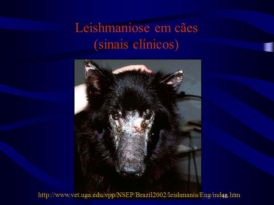 46 Leishmaniose em cães (sinais clínicos) http://www.vet.uga.edu/vpp/NSEP/Brazil2002/leishmania/Eng/index.htm