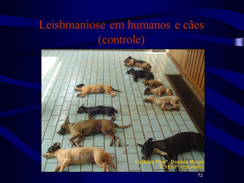 72 Leishmaniose em humanos e cães (controle) Cortesia Prof a. Daniela Rozza UNESP-Araçatuba