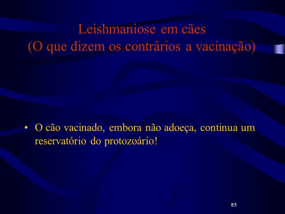 85 Leishmaniose em cães (O que dizem os contrários a vacinação) O cão vacinado, embora não adoeça, continua um reservatório do protozoário!