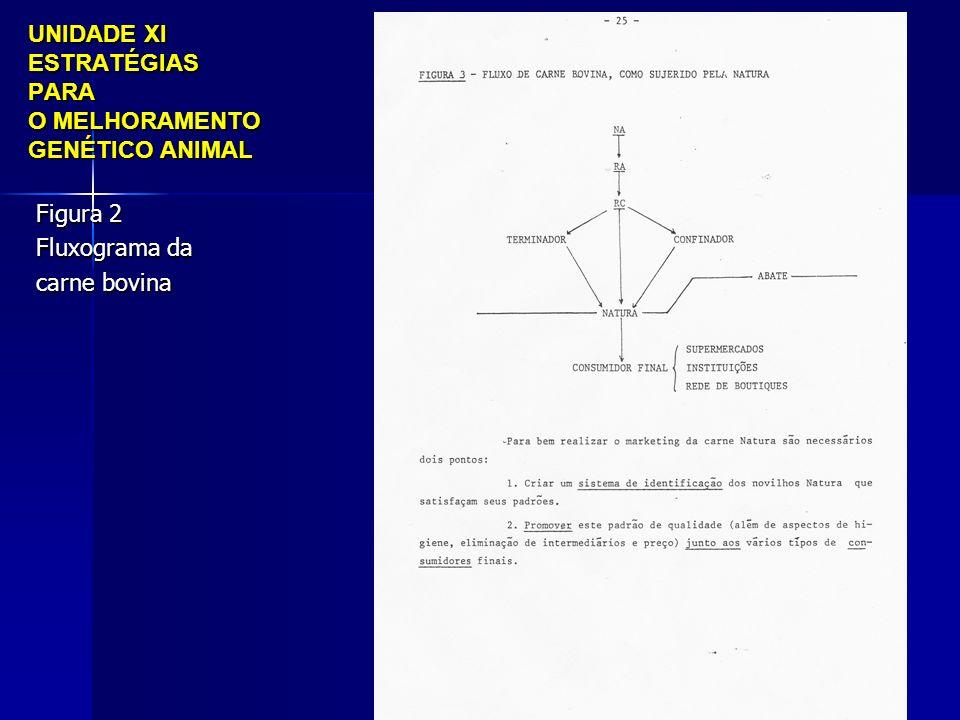 UNIDADE XI ESTRATÉGIAS PARA O MELHORAMENTO GENÉTICO ANIMAL Figura 2 Fluxograma da carne bovina