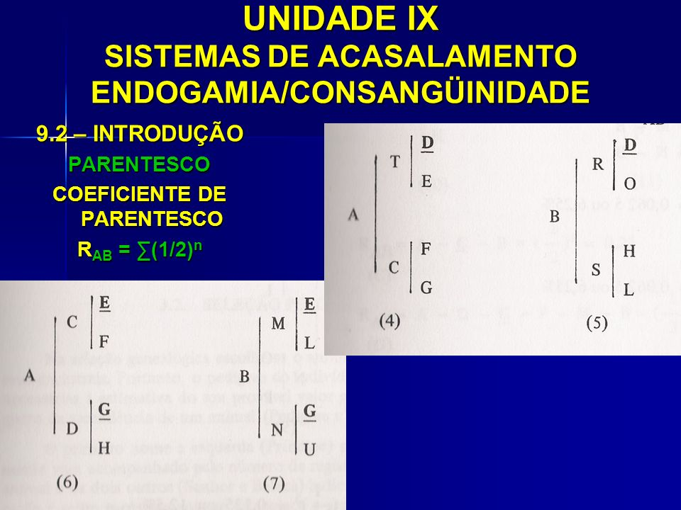 UNIDADE IX SISTEMAS DE ACASALAMENTO ENDOGAMIA/CONSANGÜINIDADE 9.2 – INTRODUÇÃO PARENTESCO COEFICIENTE DE PARENTESCO R AB = (1/2) n