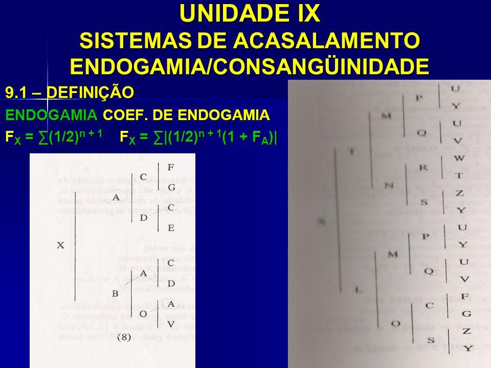 UNIDADE IX SISTEMAS DE ACASALAMENTO ENDOGAMIA/CONSANGÜINIDADE 9.1 – DEFINIÇÃO ENDOGAMIA COEF. DE ENDOGAMIA F X = (1/2) n + 1 F X =  (1/2) n + 1 (1 + F