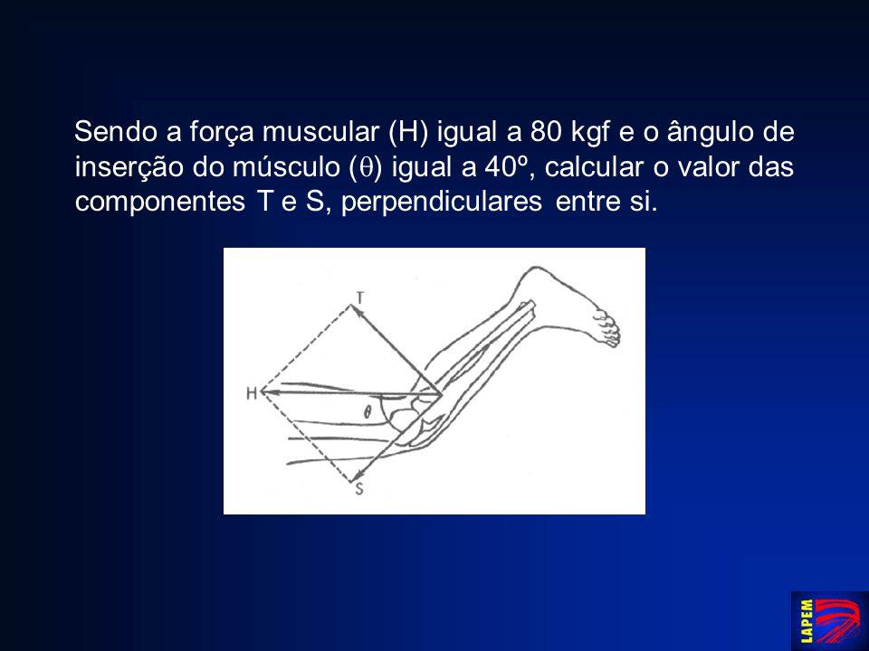 Sendo a força muscular (H) igual a 80 kgf e o ângulo de inserção do músculo ( ) igual a 40º, calcular o valor das componentes T e S, perpendiculares e