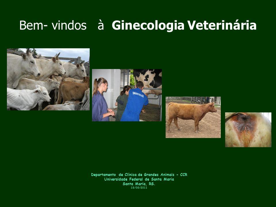 Departamento de Clínica de Grandes Animais - CCR Universidade Federal de Santa Maria Santa Maria, RS. 18/08/2011 Bem- vindos à Ginecologia Veterinária