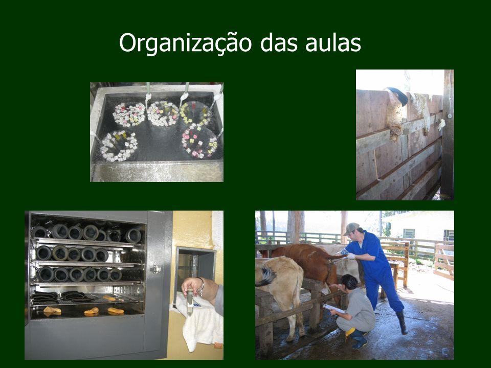 Organização das aulas
