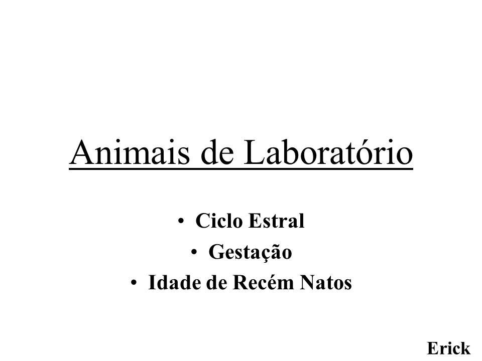 Animais de Laboratório Ciclo Estral Gestação Idade de Recém Natos Erick