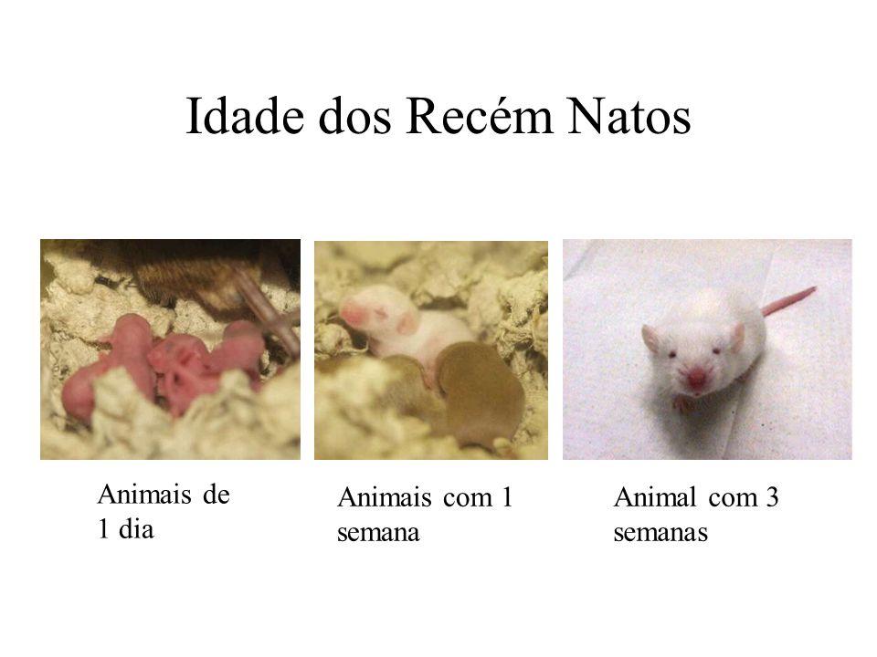 Idade dos Recém Natos Animais de 1 dia Animais com 1 semana Animal com 3 semanas