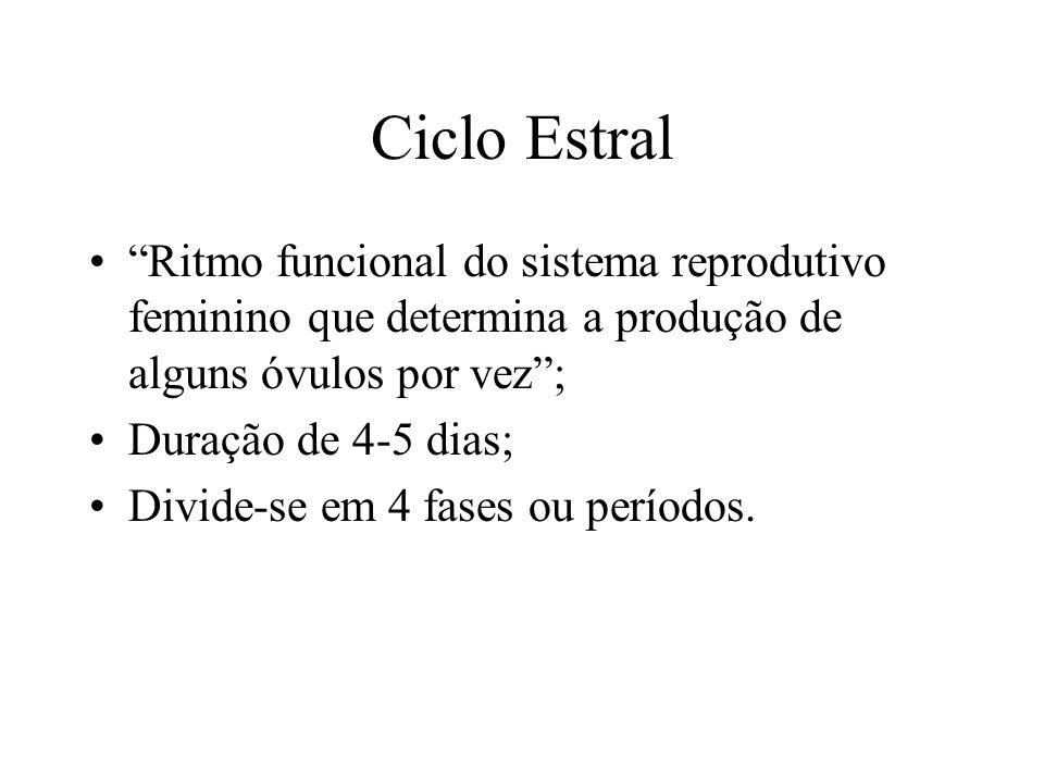 Ciclo Estral Ritmo funcional do sistema reprodutivo feminino que determina a produção de alguns óvulos por vez; Duração de 4-5 dias; Divide-se em 4 fa