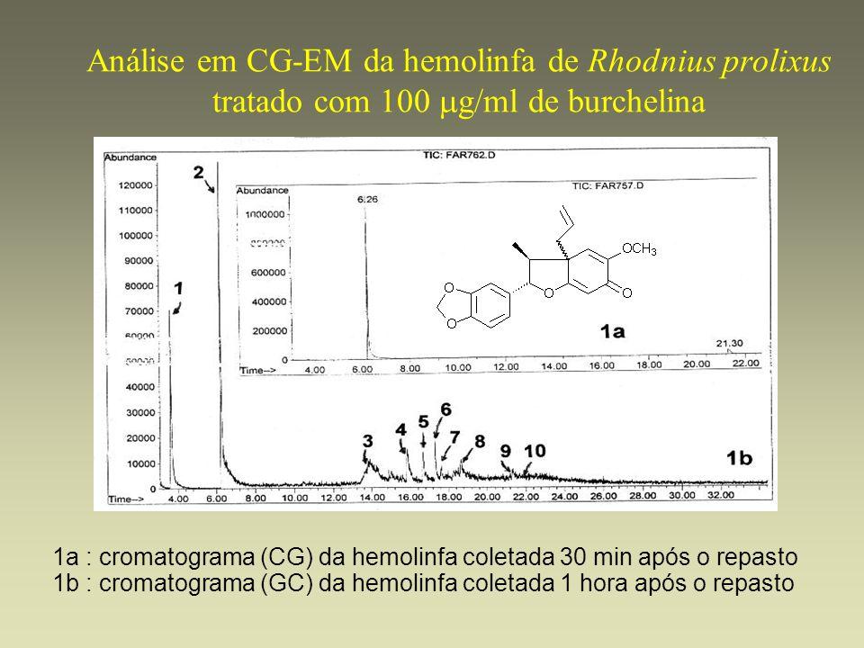 Análise em CG-EM da hemolinfa de Rhodnius prolixus tratado com 100 g/ml de burchelina 1a : cromatograma (CG) da hemolinfa coletada 30 min após o repas