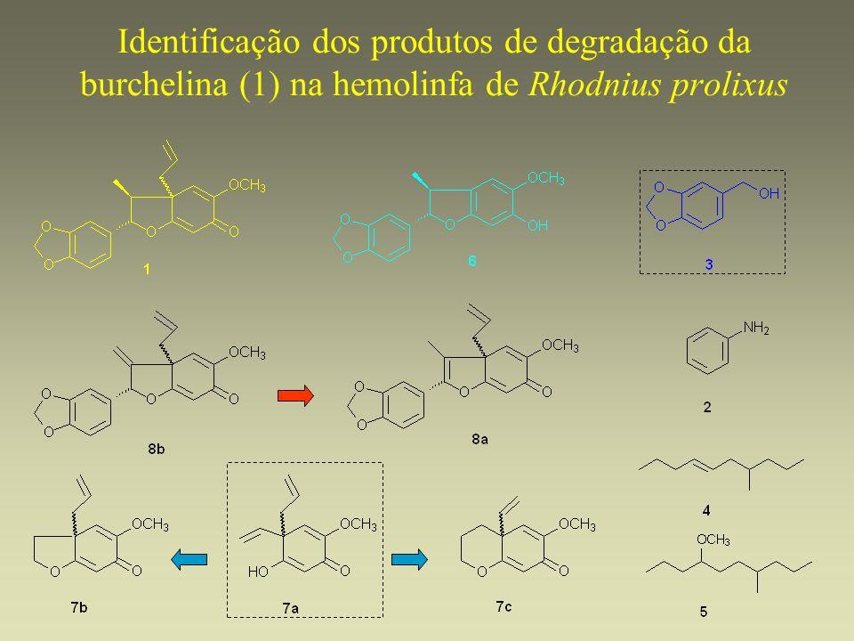 Identificação dos produtos de degradação da burchelina (1) na hemolinfa de Rhodnius prolixus